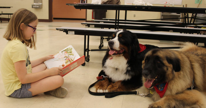 Student reads to therapy dogs.